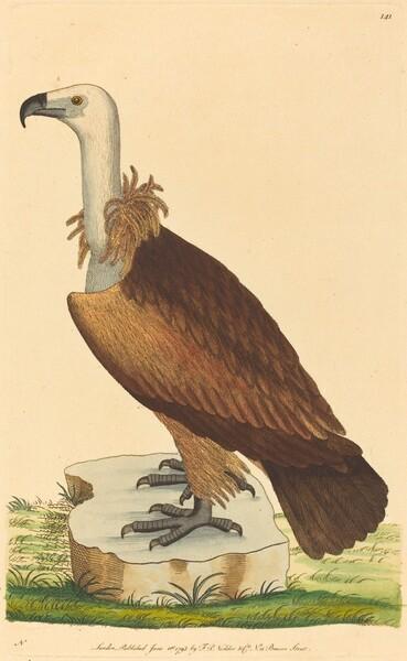 The Alpine Vulture