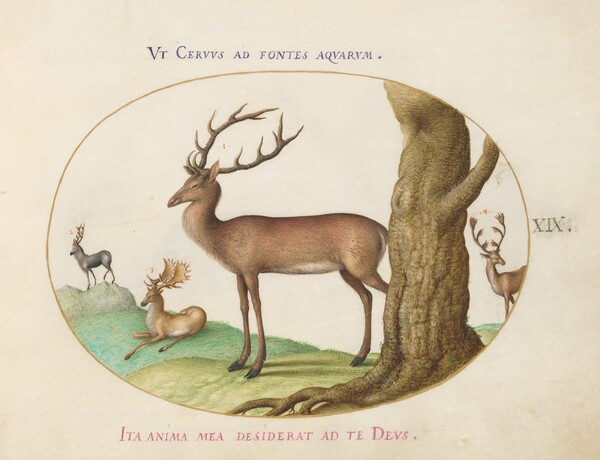 Plate 19: Four Types of Stags