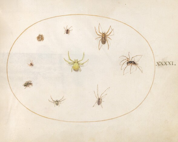 Plate 41: Yellow Spider Surrounded by Eight Spiders