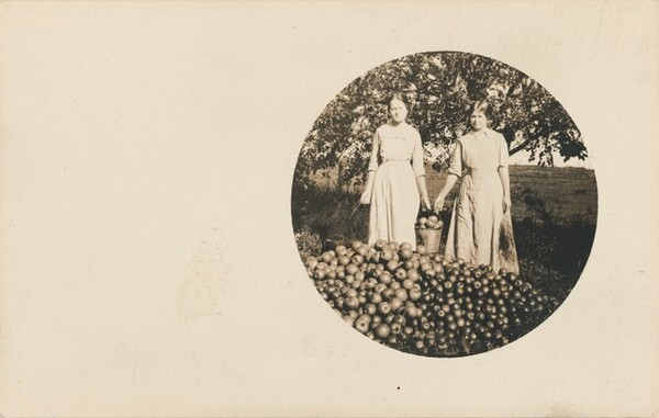 Untitled (Bountiful harvest)