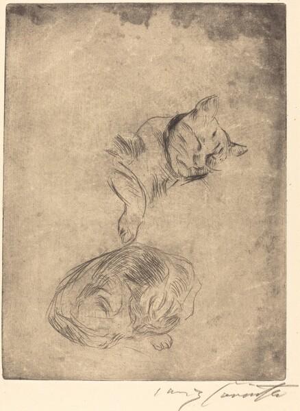 Katzenstudie (Study of Cats)