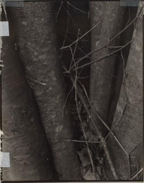 Broken Twigs, Georgetown, Maine [verso]