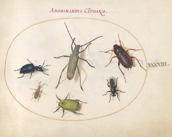 Plate 43: A Golden-Bloomed Gray Longhorn(?), Tansy Beetle(?), Cockroach, Leaf-Footed Bug, and Other Insects