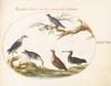 Plate 47: Shore Birds with a Perching Bird