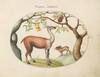 Plate 4: Llama and Moose