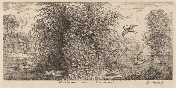 Rusticula minor, The Snipe