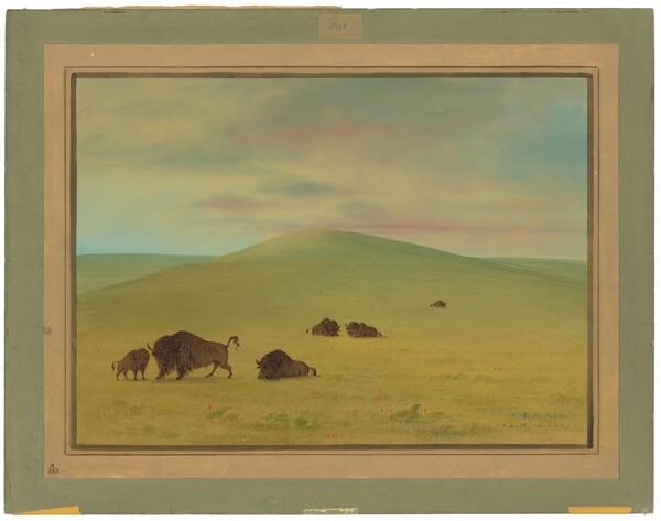 American Pasturage - Prairies of the Platte