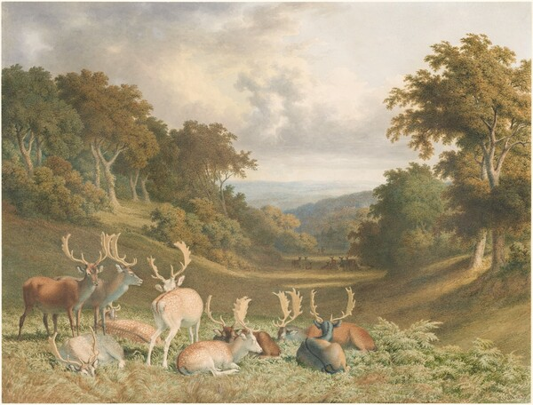 Stags in Knole Park, Kent