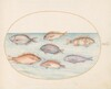 Plate 20: Sea Bream, Dentex, Sargo, and Other Fish