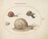 Plate 61: Four Snails