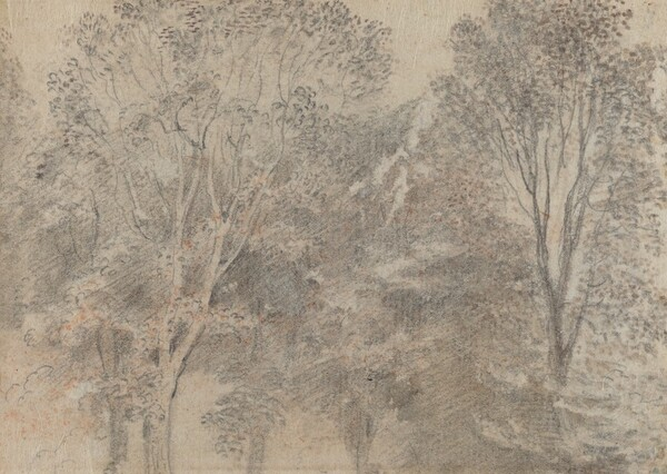 Treetops [verso]