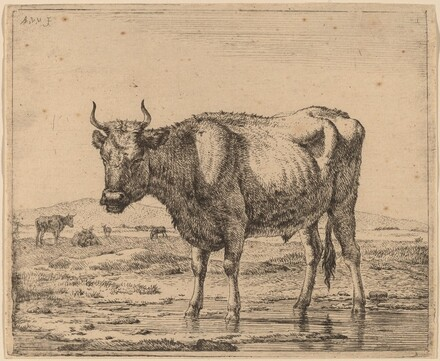 Bull Standing in Water