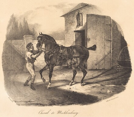 Cheval de Mecklembourg