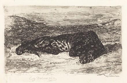 Tiger Sleeping in the Desert