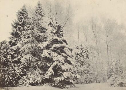 Paysage de sapins sous la neige