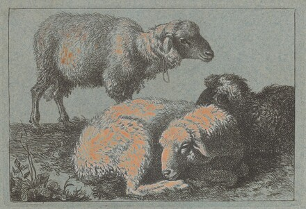 Two Reclining Sheep and One Standing Sheep