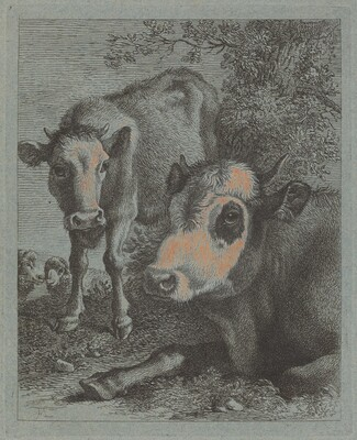 Reclining Cow and Calf in the Open