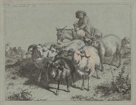 Boy on a Donkey Driving a Flock