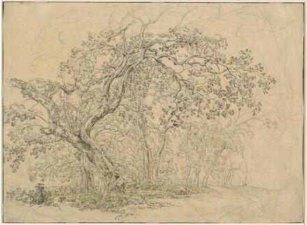 Grove of Trees [verso]