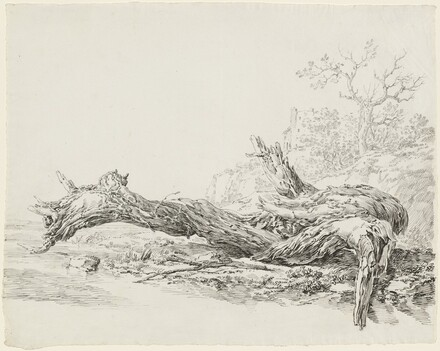An Ancient Tree Fallen Beside a Stream