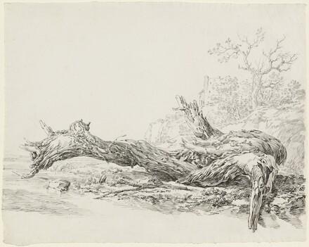 An Ancient Tree Fallen Beside a Stream