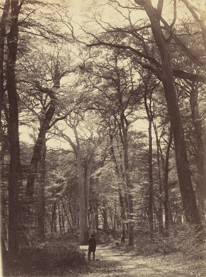 "1865 Fontainebleau Forest/"" — Fine Art Print Claude Monet : /""The Bodmer Oak"