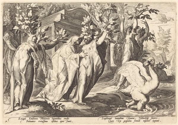 Phaeton's Sisters Changed into Poplars, Cygnus into a Swan