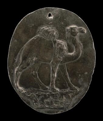Arabian Camel (or Dromedary)