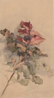 Study of the shrub