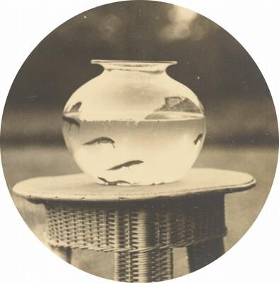 Untitled (Fishbowl)