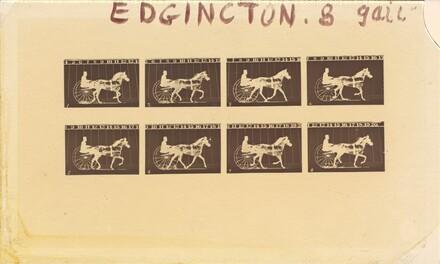 Internegative for Horses. Trotting. Abe Edgington. No. 28