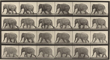 Animal Locomotion, Plate 733