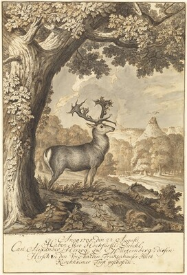 A Stag beneath a Mighty Oak