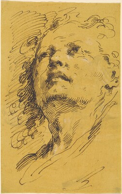 Head of a Man Looking Up