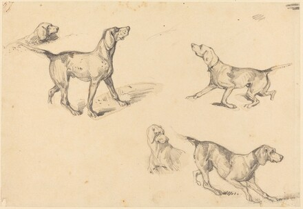 Five Studies of a French Pointer