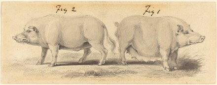 Two Chinese Pigs