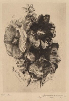 Dark Single Hollyhocks