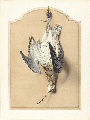 Trompe l'Oeil: A Curlew Hanging from a Nail