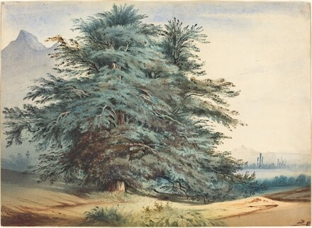 Two Ancient Trees before a Mountain Peak