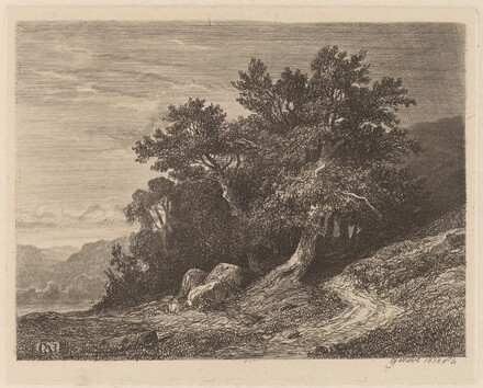 Ancient Trees on a Hillside