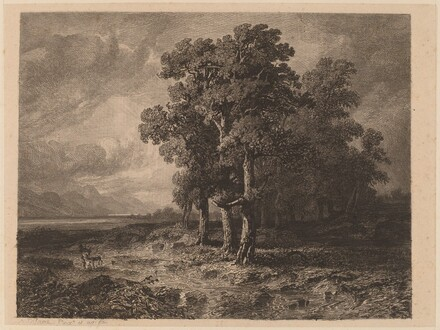 Trees in a Storm
