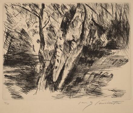 Birch Trees in the Tiergarten