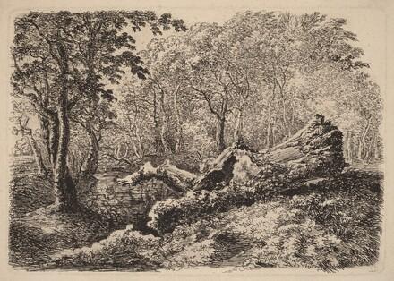 Mouldering Tree Trunk
