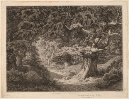 Le Charlemagne (forêt de fontainebleau)