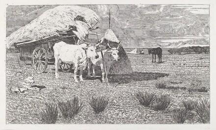 Oxen Yoked to the Cart (Maremma) [Bovi al carro (Maremma)]