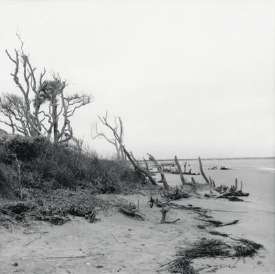 Folly Beach, South Carolina, 1999