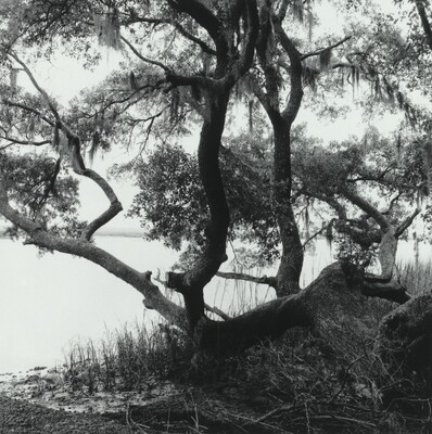 Boyd's Landing, South Carolina