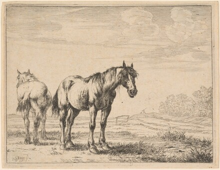 Two Plow Horses Standing in a Field
