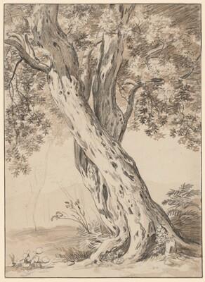Two Intertwined Oak Trees