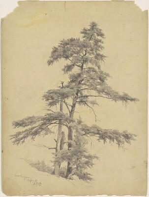 Trees, West Virginia